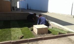 Рабочие высаживают газон у дома № 60