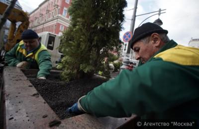 Озеленение столичных улиц с помощью деревьев в кадках поддержали участники опроса «Активного гражданина»