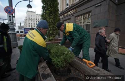 На портале «Активный гражданин» москвичи поддержали высаживание деревьев на улицах города