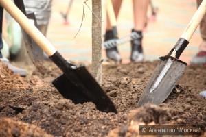 Свыше 1450 деревьев посадят этой весной в районе Москворечье-Сабурово
