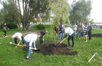 Почти в 60 дворах района высадят новые деревья