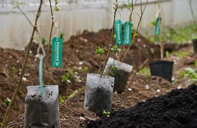 «Активные граждане» решат, в каких дворах высадят деревья в 2017 году