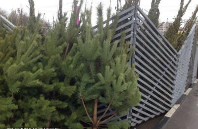 Жители района смогут принять участие в акции по сбору елок