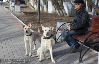 В январе жители Москворечья-Сабурова смогут бесплатно привить домашних животных