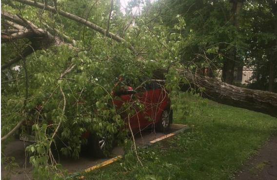 Для преодоления последствий урагана вЩукине мобилизовано 350 коммунальщиков