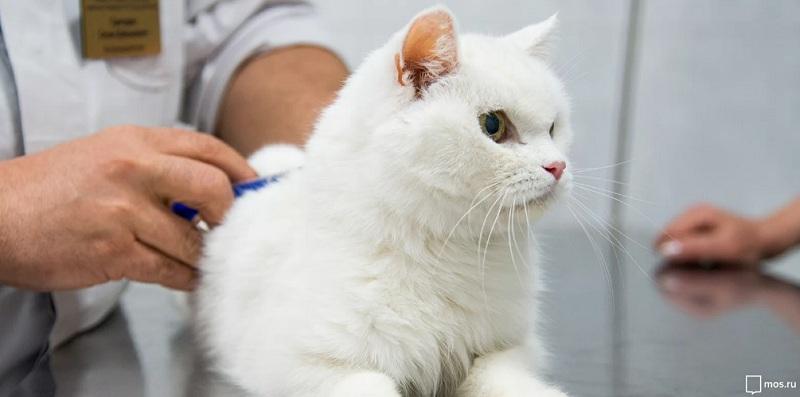 ветеринар, кошка, прививка, мосру 2002